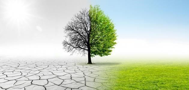 Climate Change, its Relationship to Afforestation, and the Contribution of the High Atlas Foundation